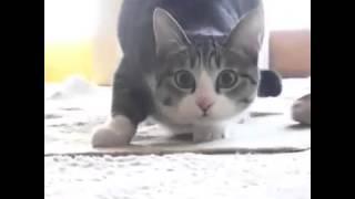 Lustigste katze der welt