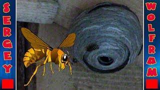 Осы осиное гнездо(Wasps Hornet's Nest)