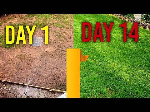 Download Watering new grass seed (day 1, 7, 14) - 4 Week Time Lapse