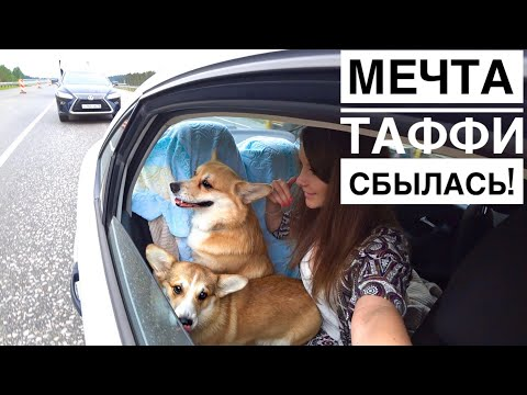 ЕДЕМ НА ДАЧУ! Собаки в восторге💜 Наводим порядок /Часть 1