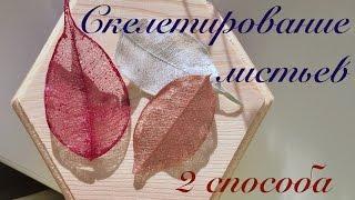 Скелетирование листьев // 2 способа // Прозрачные листья в домашних условиях