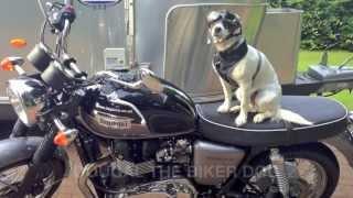 Dougal the Biker Dog
