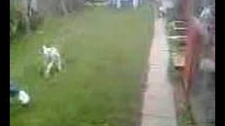 eamo and ror's pet sheep.