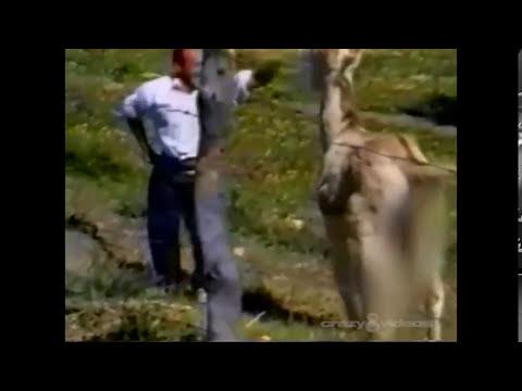 MAN CHASED BY LOVESICK DONKEY! thumbnail