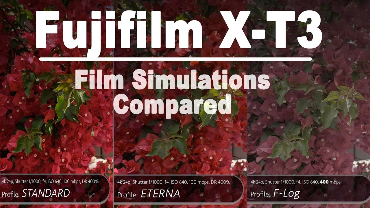 Fujifilm X-T3: EVERY Film Simulation Compared + My favorite pick for video