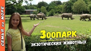 Идем в ЗООПАРК смотреть на Кенгуру, Тигра, Льва, Пингвина, Слона и других животных