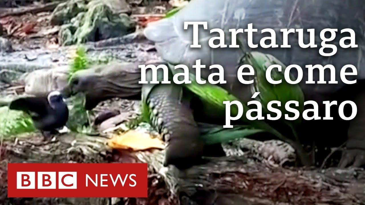 'A natureza é cruel': tartaruga é filmada matando e comendo passarinho