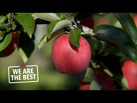 Newcastle, Ont.: the apple capital of Canada | We Are The Best