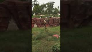 #Panda: Well, all I want is to enjoy a better view on the tree