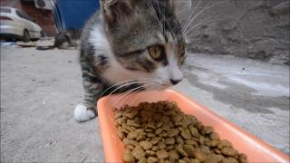 Stray Cats Eating Cat Food l Adorable Cats- Adorable Kittens