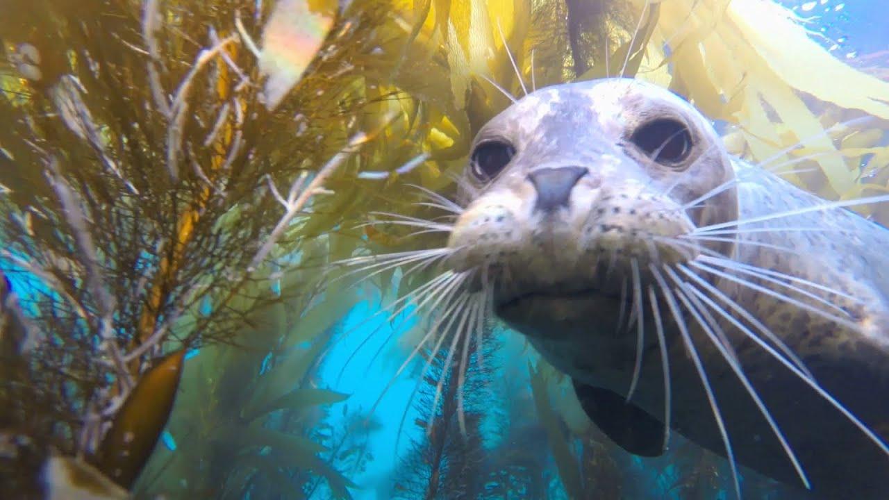 Gopro hero3+ black underwater freediving with California ...