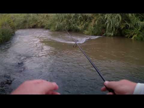 летняя рыбалка на карпа - 2017-12-18 10:56:56