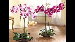 видео Как размножить орхидею боковыми побегами?