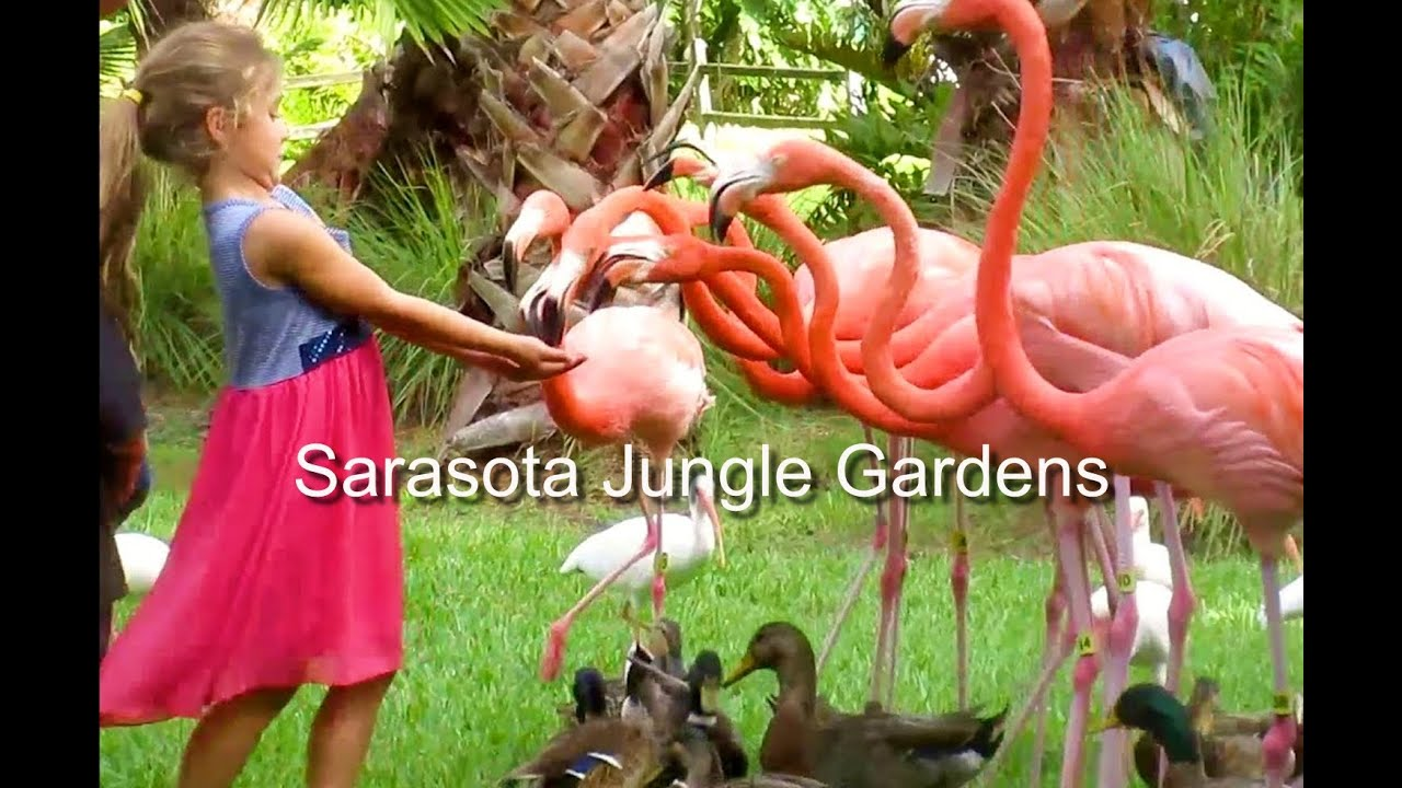 Sarasota Jungle Gardens Review Youtube