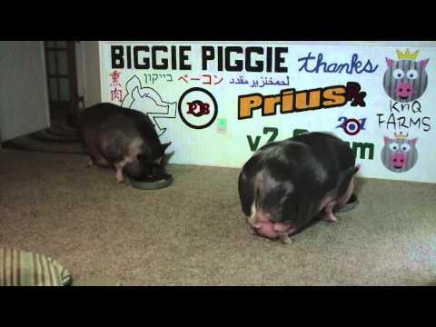 Biggie Piggie Vs Schlotzskys Angus Corned Beef Reuben v20com