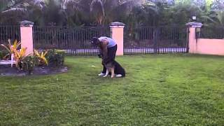 "K9 Enforcement Miami Dade Dog Training -""price"" Obedience"