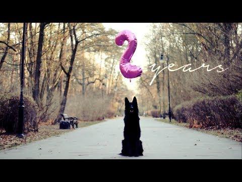 Haru ; Belgian Shepherd Groenendael ~ 2 years | tricks/frisbee/agility/obedience |