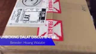 Unboxing Dalat Discus, Breeder Hoang Watabe