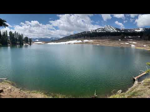 May Trip to Yellowstone with Wolves, Bears, Elk, Bighorn Sheep, Moose, Pronghorn and More