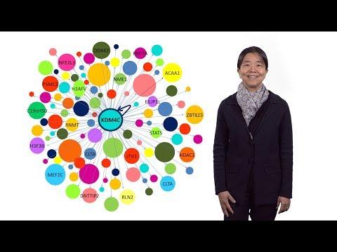 Vivian Cheung (U. Michigan / HHMI) 1: Individual Variation in Gene Expression