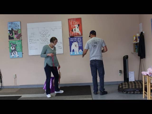 Real Dog Trainers of SLC- Dog Training Session With Joe