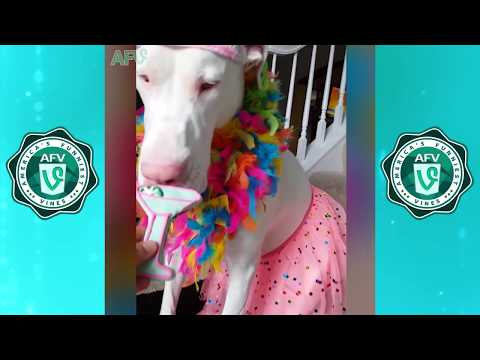 TRY NOT TO LAUGH Watching Funniest Cats and Dogs Vines and Fails Compilation   January 2018 #2 - AFV