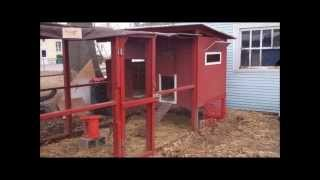 Backyard Chicken Coop Tour