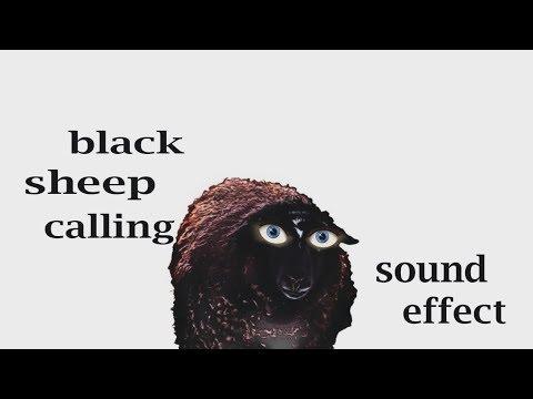 Black Sheep - YouTube