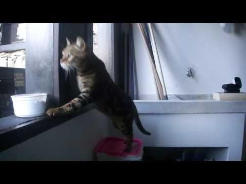Feline intelligence
