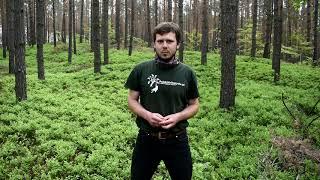 Szkolenie arborystyczne - poznajmy bliżej pracę na drzewach