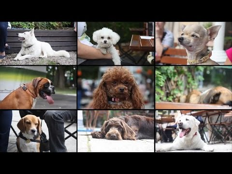 Az I. Kutyabarát Délutánról kellett egy rövid eseményvideót készítenünk.