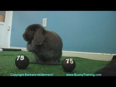 bunny olympic training