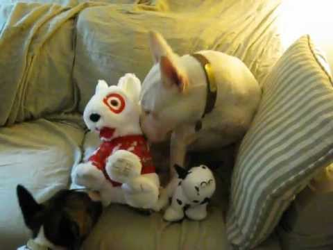 target dog toys