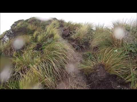 Tararua Mountain Race 2017 - YouTube