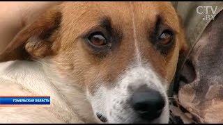 В Мозыре хозяин жестоко наказал собаку за то, что та покусала его 5-летнюю дочь