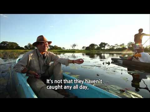 South Africa Part 3.Okavango, Botswana's Oasis  / 영어로 하는 세계테마기행