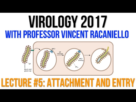 Virology Lectures 2017 #5: Attachment and Entry