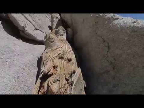 Climbing Mt. Whitney via Mountaineer's route summit success in June