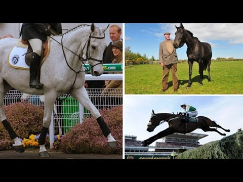 Grand National Winners: Where Are They Now?