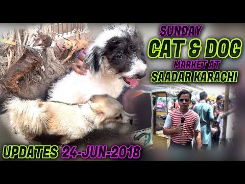 Dogs & Cat Sunday Market Saddar Karachi 24-June-2018 Latest Updates Jamshed Asmi Informative Channel