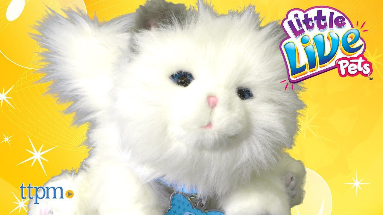 Little Live Pets Cuddles My Dream Kitten from Moose Toys
