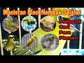 Masteran Pleci Nembak Sejalur Paling Di Cari Para Pleman  Mp3 - Mp4 Download