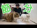 【節分】猫と餌まきやってみた