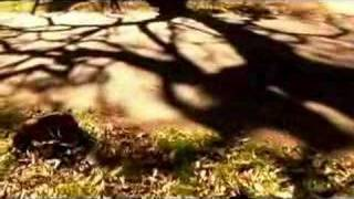 Jeites - Down the Valley