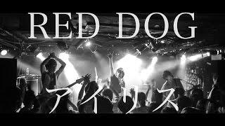 RED DOG - アイリス Lyrics Music Video