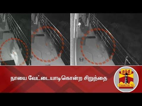 நாயை வேட்டையாடி கொன்ற சிறுத்தை - #CCTVFootage | Viral Video | Thanthi TV
