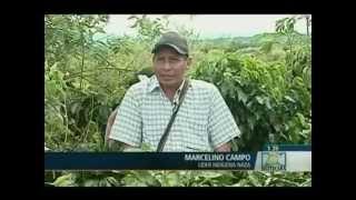 Noticias RCN: De la siembra de coca al café