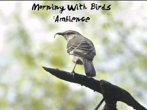 MorninG With Birds : Ambience |SoundEffect 1080p HD