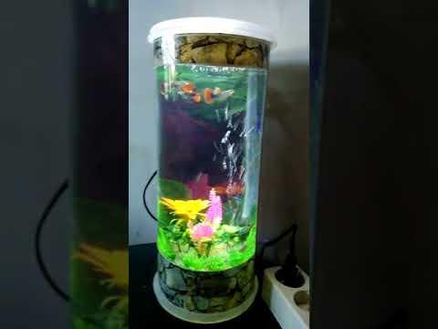 Aquarium Ikan Cupang Minimalis 085336444466 Wa Youtube