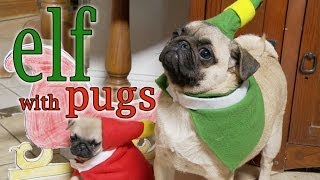 Elf Movie (Pug Puppy Version)